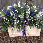 ####Country casket spray 4ft £120. 5ft £150 6ft £170